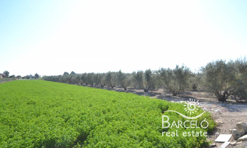 Country Property - Investments - Dolores - Dolores